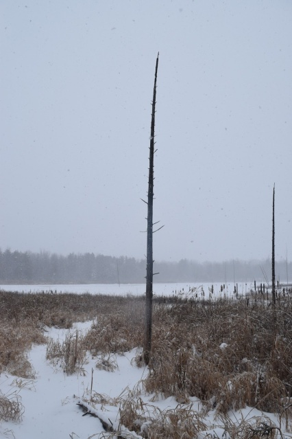 Cross-Country Skiing in Ottawa's Greenbelt - TheCraftyMann.Blogspot.com