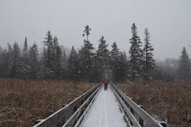 Cross-Country Skiing in Ottawa's Greenbelt