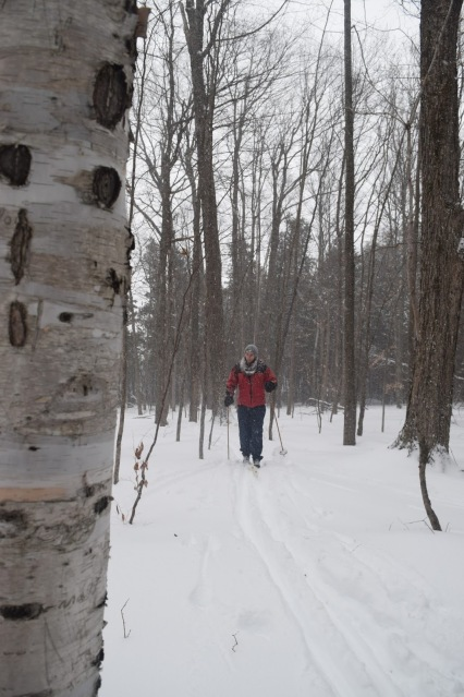 Cross-Country Skiing in Ottawa's Greenbelt - TheCraftyMann.Blogspot.com