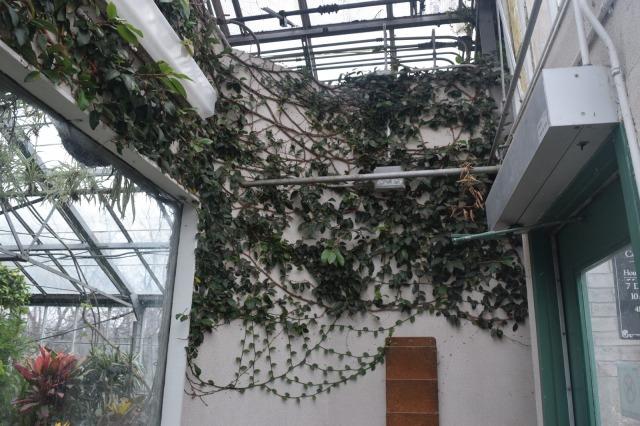 Allan Gardens - Free Things to Do in Toronto - TheCraftyMann.Blogspot.Ca