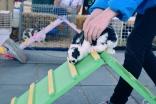 Bunny agility