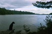 Ollie looking back over Sharp Rock Inlet